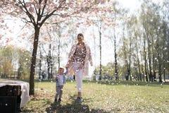 走与她的男婴儿童儿子的年轻母亲在公园在佐仓树下 免版税图库摄影