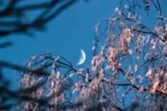 走与月亮 免版税库存照片