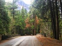 走与有些鹿动物在优胜美地国立公园 库存照片