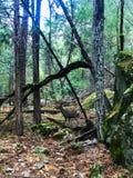 走与有些鹿动物在优胜美地国立公园 库存图片