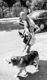 走与狗和酒的一个人在市科托尔在6月2日 免版税库存图片