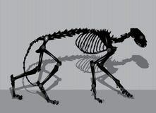 机器人猫骨骼 图库摄影