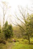 走入雾森林 库存照片