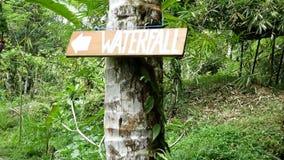 走到沿道路的瀑布在雨林 股票录像