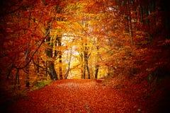 走到秋天时间的森林 库存照片