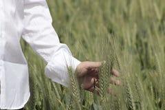 在麦子的手 免版税图库摄影