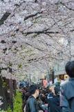 走和享用在Meguro河,东京,日本的人们 库存照片