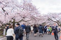走和享用樱花和放松在Chid的人们 免版税图库摄影