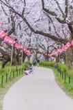 走和享用樱花的人们在日本 免版税库存图片