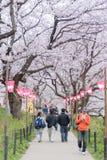 走和享用樱花的人们 库存图片