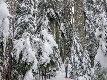 走和敬佩冬天风景的惊人的秀丽的在赛普里斯山的snowshoer 免版税库存照片