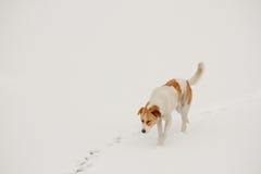 走和追逐在雪的街道狗 免版税库存照片