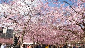 走在一个用花装饰的公园的人们 股票视频