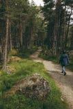 走在一串足迹的妇女在杉木森林地 免版税库存图片