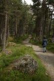 走在一串足迹的妇女在杉木森林地 库存照片