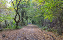 走在一条道路的两个人在森林里在秋天 免版税库存图片