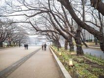 走在上野公园 免版税库存照片