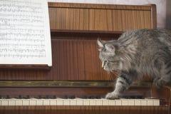 走在与音乐纸张的钢琴钥匙的猫 免版税库存图片