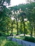 走在中央公园的妇女 免版税库存图片