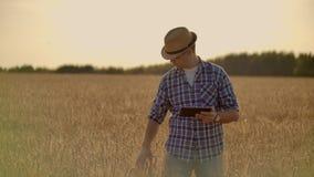 走在他的农场的金黄麦田的时髦的老白种人农夫在早晨日出期间 股票录像