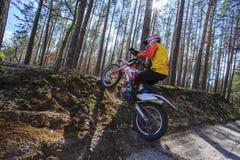 走在体育在森林里骑自行车 库存照片