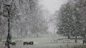 走在公园在雪期间 股票录像