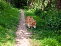 走在公园的一条逗人喜爱的小狗 免版税库存图片