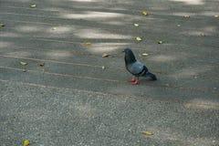 走在公园的鸟 图库摄影