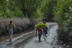 走在农村路的藏族 库存照片