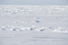 走在冰的北极熊 免版税库存照片