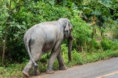 走在土路的大象在forestThailand附近 免版税库存照片