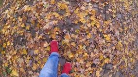 走在地面下落的黄色和凋枯的叶子的女孩在晴朗的秋天天 股票视频