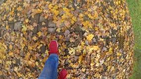 走在地面下落的黄色和凋枯的叶子的女孩在晴朗的秋天天 股票录像