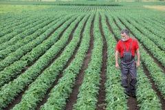 走在大豆领域的农夫或农艺师和审查植物 免版税库存图片