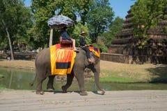 走在大象在阿尤特拉利夫雷斯历史公园  泰国 库存照片