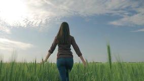 走在大麦庄稼和接触植物中的美丽的年轻女性农夫用她的手然后转向照相机和 股票视频