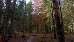 走在小径的第一人景色通过森林 股票录像