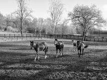 走在小牧场的马 免版税库存图片