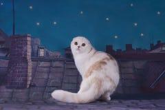 走在屋顶的猫在晚上 库存图片