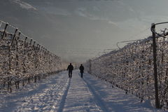 走在山的男人和妇女到nord意大利SÃ ¼ dtirol 免版税库存图片
