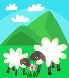 走在山背景的一个绿色草甸的绵羊家庭和与云彩的蓝天导航例证 免版税库存图片