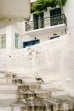 走在希腊海岛上的台阶的猫 免版税库存照片