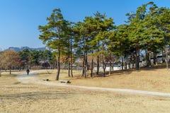 走在庭院里的12月6,2017游人在Gyeongbok宫殿,汉城 库存照片