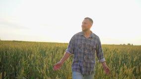 走在成熟麦田的愉快的白种人男性农夫在日落或日出 供以人员麦子的农夫人感人的耳朵  股票录像