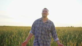 走在成熟麦田的愉快的白种人男性农夫在日落或日出 供以人员麦子的农夫人感人的耳朵  股票视频