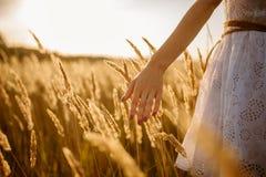 走在日落的一个黑麦领域的女性 免版税库存照片