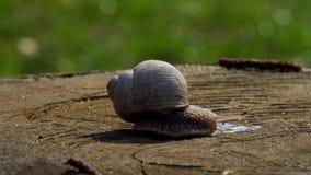 走在日落的蜗牛 股票录像