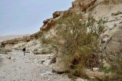 走在旱谷Murabba `的旅行家在峡谷, Judean沙漠,以色列 库存图片