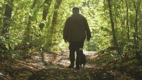 走在有他的狗的,一个晴朗的春日森林的老人 太阳的美好的光芒 股票视频