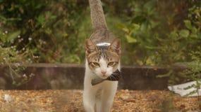 走在有大弓的庭院里的小猫 免版税库存图片